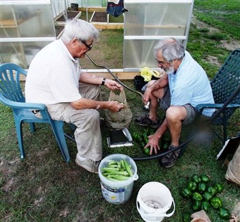 O.C. Cook, left, and master gardener Skip LaBelle sort and rinse peppers from Floral City UMC garden